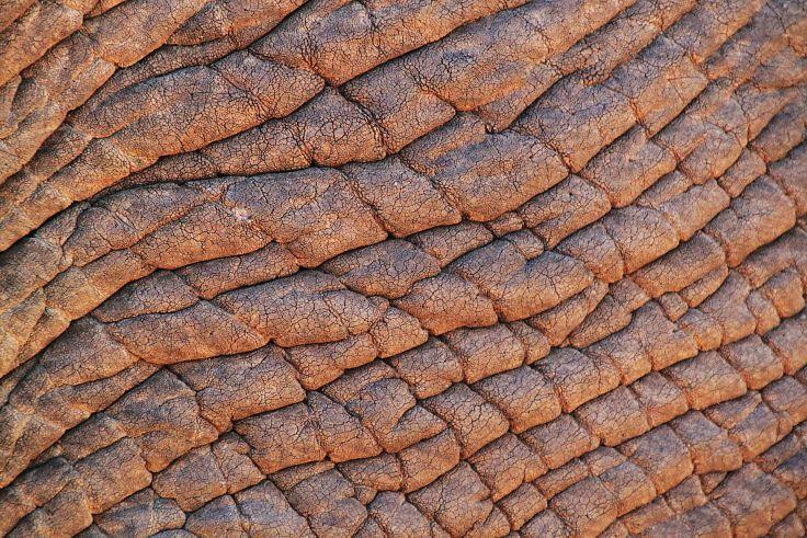 Texture Adorns - A poem about how texture adorns all the senses and life